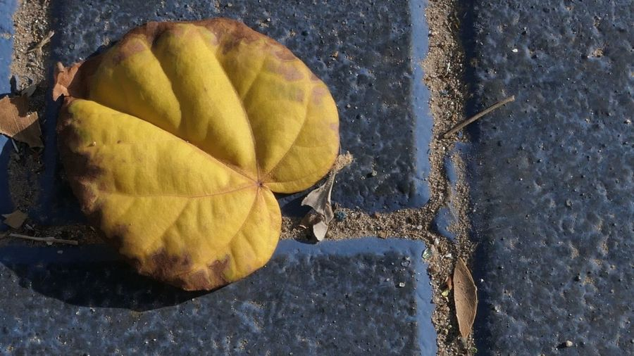 City Paving Stones Street Yellow No People Day Nature Close-up Directly Above Outdoors Leaf Sunlight Plant Part Textured  Pattern Still Life Footpath