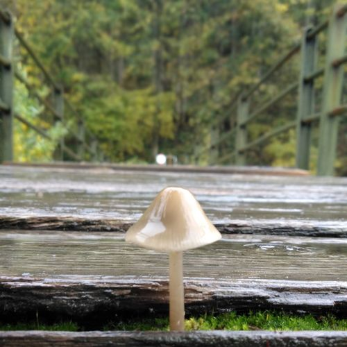Close-up of mushroom growing on riverbank