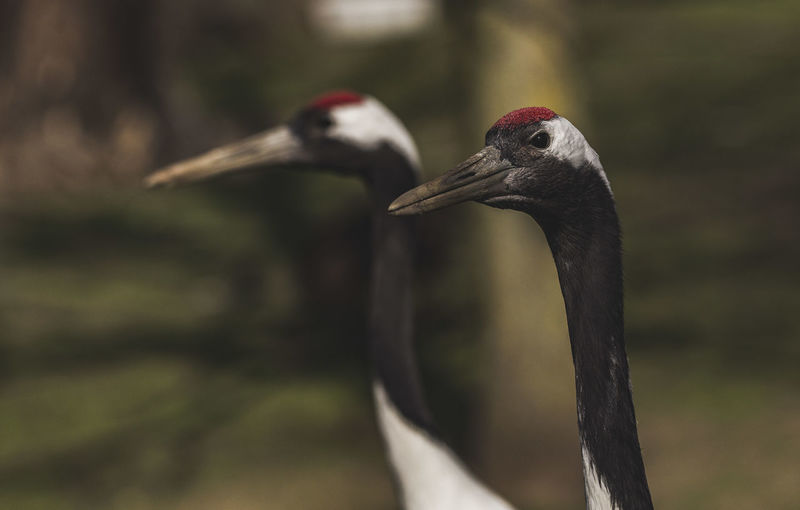 Close-up of cranes looking away