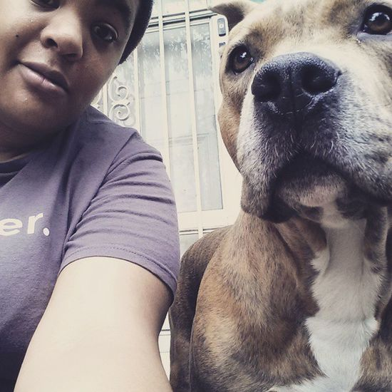 Molly is having none of my selfie bullshit. Pibbles Petsofinstagram Pitbulls Dontbullymybreed Pitsofinstagram Pittbullsofinstagram Pitbulllove Pitbulladvocate