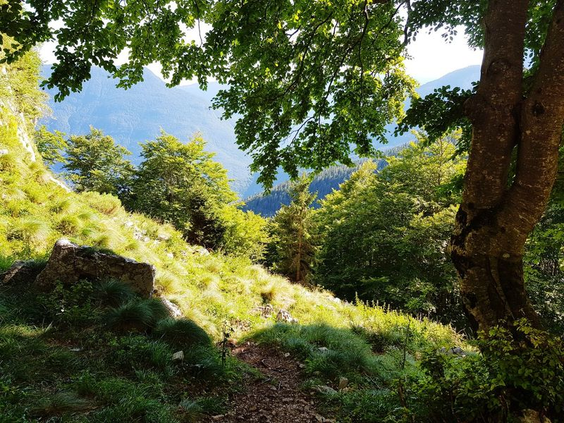 Tree Day Nature Green Color No People Growth Outdoors Leaf Beauty In Nature Sky Close-up Slovenia Bovec