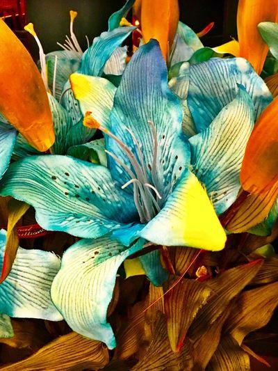 Artificial Beauty 4 Flower Petal Beautiful LPhoneography Nature Close-up Flowers Creative Flower Head