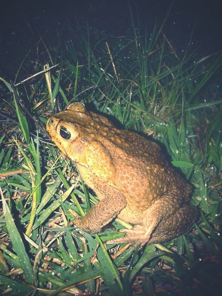 Quindío Colombia Nature Beautiful Nature Hello World Frogs Animals