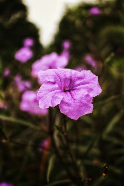 Capture with love Flower Head Petal Pink Color Fragility Purple Plant Freshness Outdoors Nature No People Beauty In Nature Close-up Day