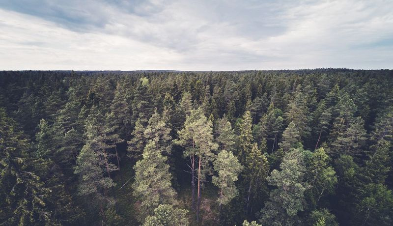 This is where I belong. Småland Sweden Sweden Nature Landscape Dronephotography WoodLand Forest No People Non-urban Scene Beauty In Nature Green Color Fir Pine Tree Pine Nature Beauty In Nature Cloud - Sky Outdoors Scenics Growth Rural Scene Tree Day Sky