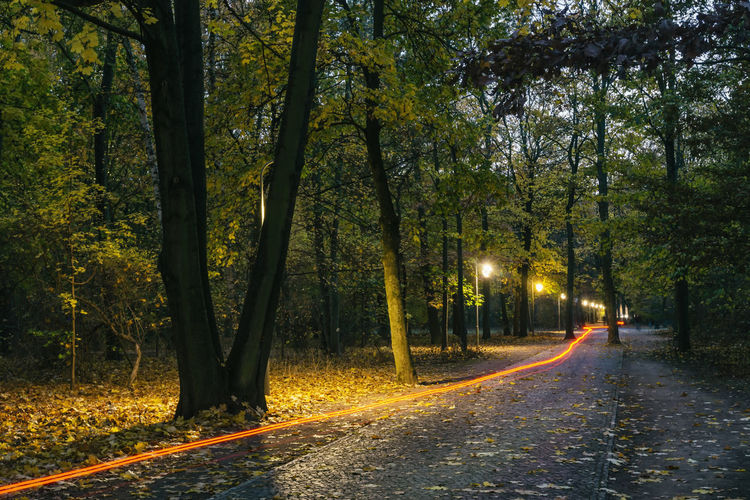 Path Through Park at Dusk with Light Trail of Bicycle Berlin Germany 🇩🇪 Deutschland Horizontal Outdoors Color Image No People Tree Plant Road Direction The Way Forward Transportation Nature Forest Growth Illuminated Tranquility Diminishing Perspective Beauty In Nature Street Light Bicycle Light Track Street Light Trunk Tree Trunk