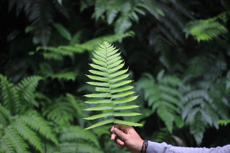 Cropped image of hand holding leaves of tree