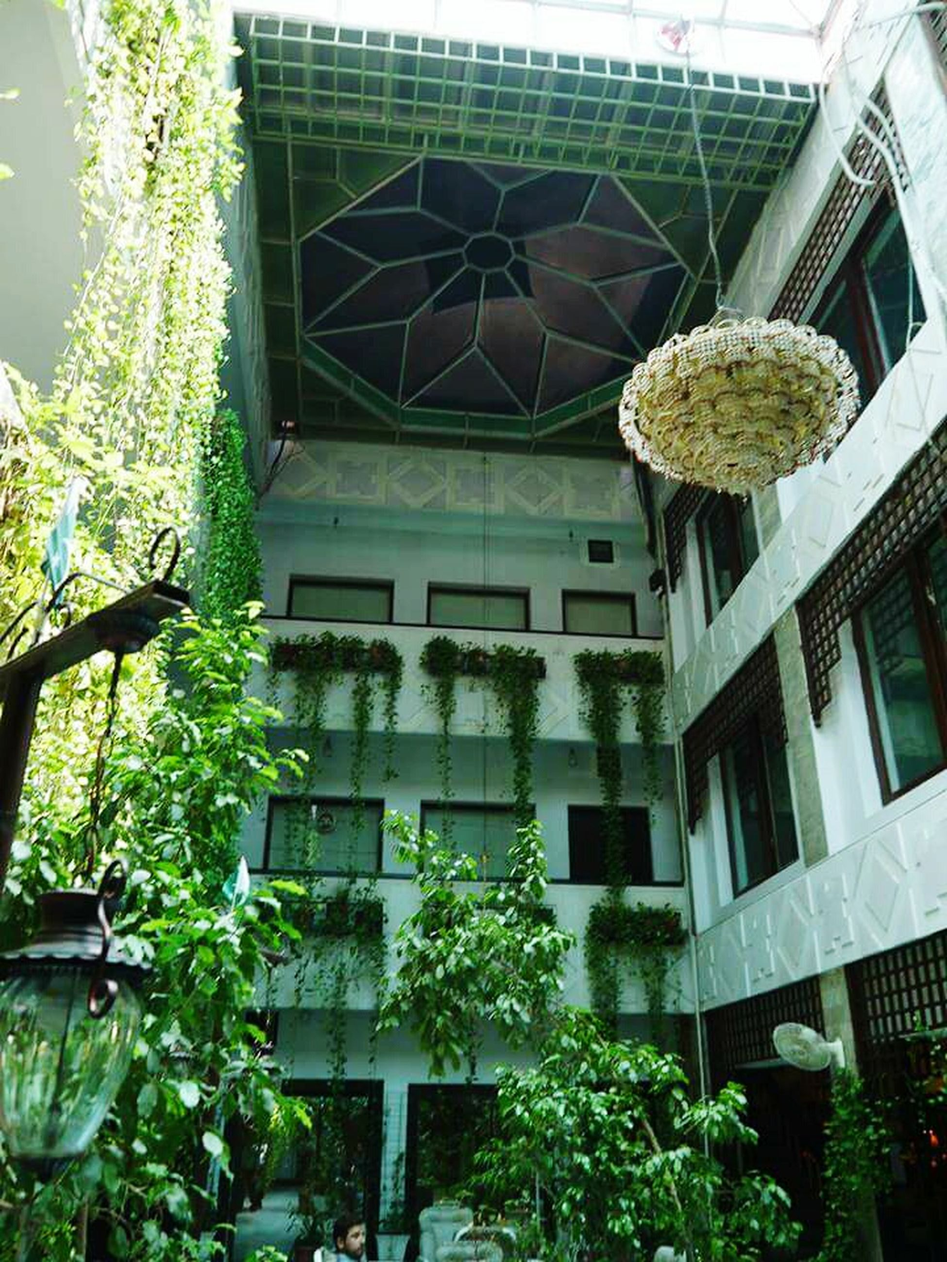 green color, plant, building exterior, architecture, tree, low angle view, built structure, outdoors, day, no people, nature, greenhouse