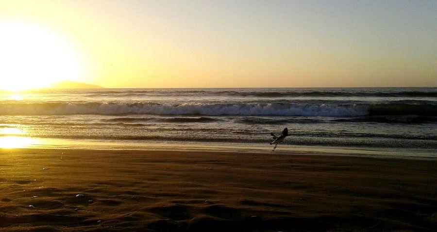 Beach | Reñaca Phsofiareinoso Mobilephotography FotografíaMóvil Chile Beach Sand Sunset Seagull Ocean Mare Landscapes