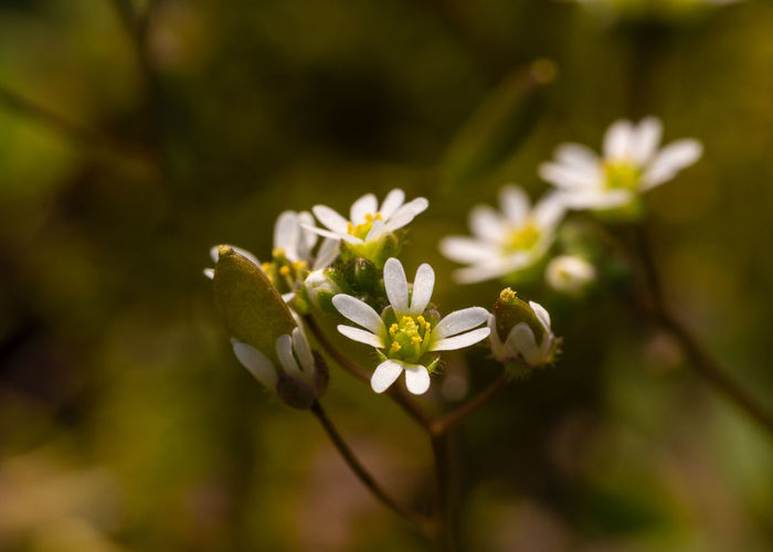 little blossom Flower Flowering Plant Plant Beauty In Nature Close-up Fragility Nature Day White Color Focus On Foreground Outdoors Beauty Growth No People Selective Focus Flower Head Spring Flowers
