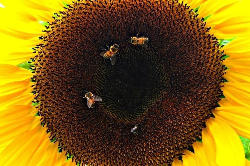 Eye4photography  Nature_collection Flowers Sunflower