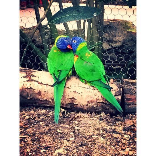 Hello World Hi! Cheese! Bird Photography Couple Green Zoo Taking Photos Enjoying Life Picoftheday Beautiful Colors Light Weekend Activities