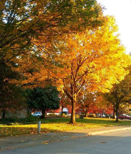Tree Road Autumn Yellow Street Tree Trunk Leaf Sky