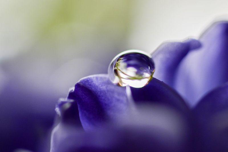 Close-up of purple man