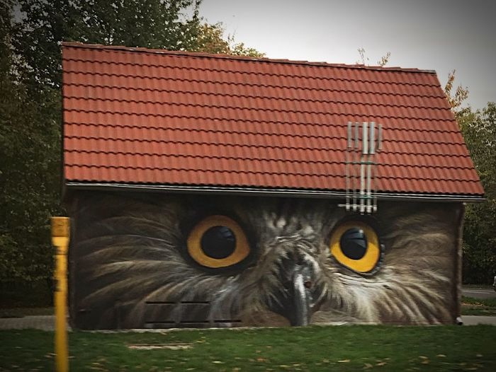 Look in my Painted Owl StreetArtEverywhere Streetart Animal Themes Animal Vertebrate No People Built Structure