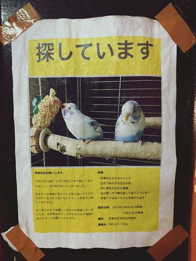 Kyoto Lost Pet