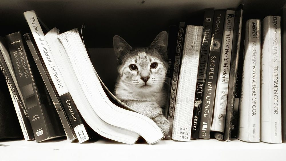 My Cat Cats Of EyeEm BOOK SHELF Book Case Nice Spot Chill Black And White Books Hanging Out
