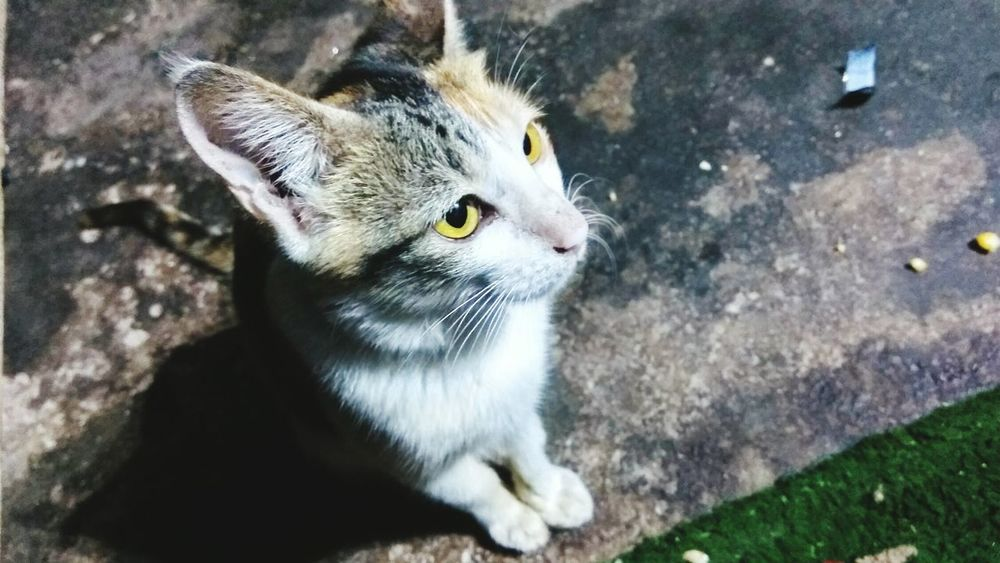 Even my cat knows how to give a pose😂 Cats Cats Of EyeEm Cat♡ Catlover ♡ Cat Photography Cat Eyes Cat Watching EyeEm Pictureoftheday EyeEm Gallery EyeEm Best Edits Eyeemmarket Eyem Best Shots Eyeemgallery PicturePerfect Mobile Photography No People