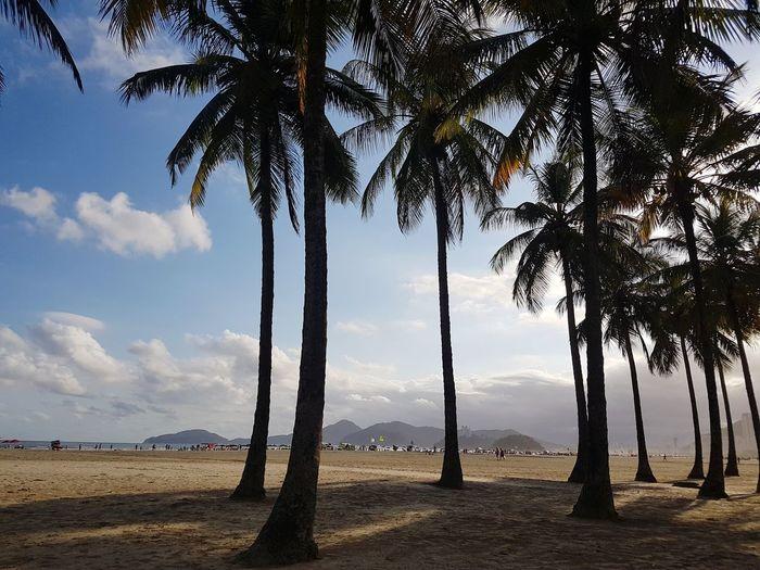 Gonzaga Beach,