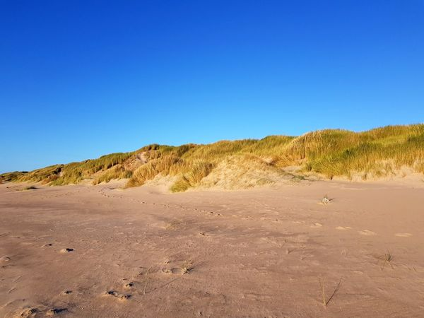 Beach Sand Sand Dune Sunny Clear Sky Traces In The Sand Grass Blue Nature Blue Sky Beauty In Nature Sky Tranquility Landscape Travel Destinations The Week Of Eyeem EyeEmNewHere Freshness Island Ouddorp Netherlands Breathing Space Your Ticket To Europe