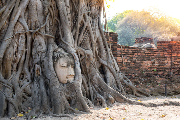 Sculpture of buddha statue against trees