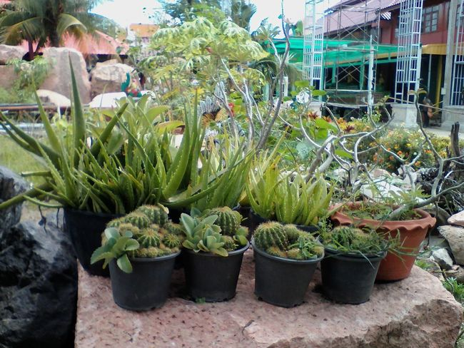 Plant Nursery Beauty In Nature