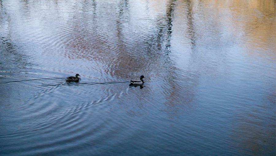 quack Water
