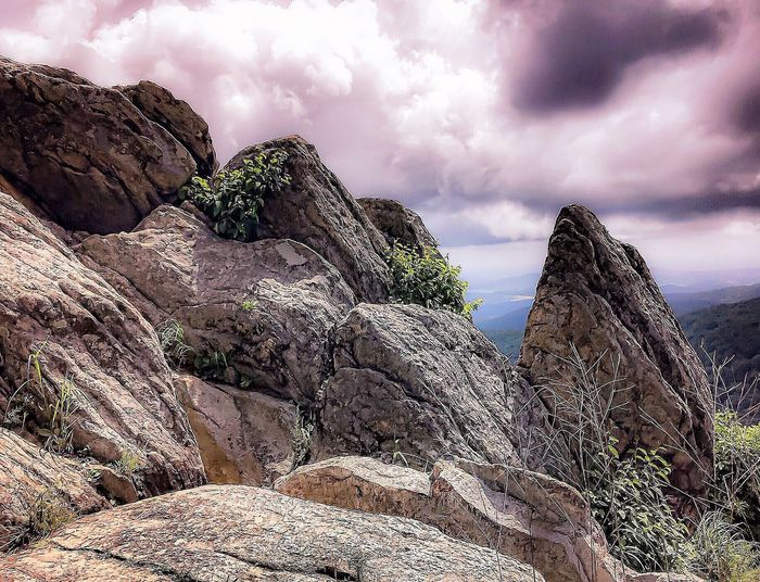 Rock Shenandoah Valley - Virginia EyeEm Selects Cloud - Sky Sky Nature Plant Land No People Day Beauty In Nature Low Angle View Tranquility Sunlight Tranquil Scene Scenics - Nature Overcast Tree Growth Outdoors