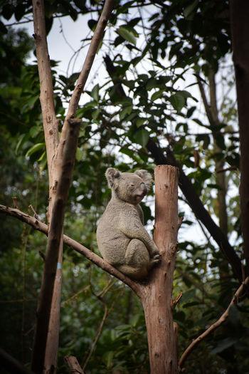 Koala sitting on branch of tree