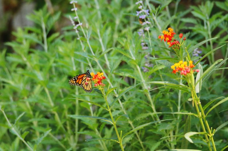 Insect Animals In The Wild Flower Animal Themes Plant One Animal Nature Green Color Growth Outdoors Day No People Fragility Leaf Close-up Beauty In Nature Grass Flower Head Freshness