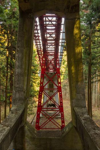 Underneath The Bridge Architecture Bridge Built Structure Day Forest Nature Outdoors Tree