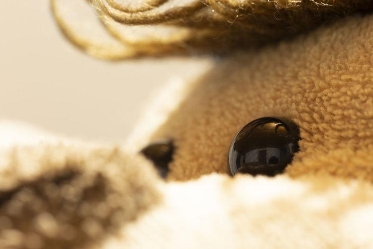 Mirada de Micus Close-up No People Selective Focus Textured