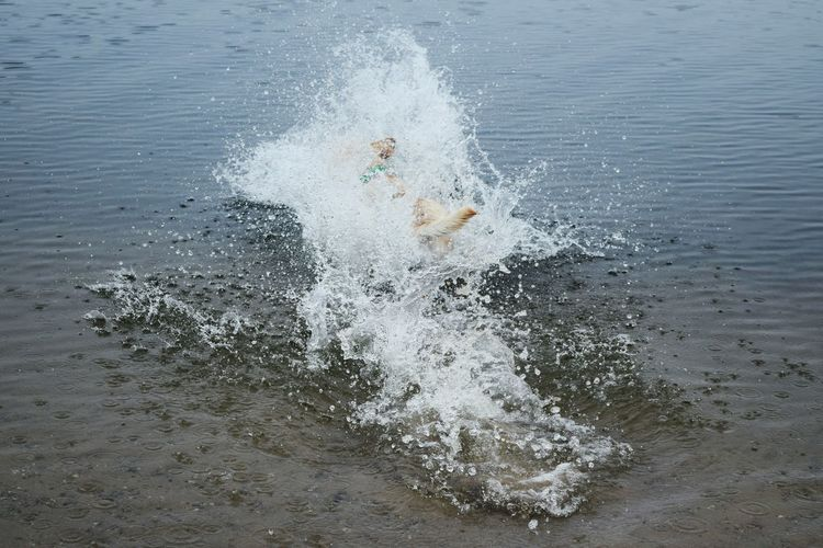 Water High Angle View Splashing Swimming Lake Neustädter See Water_collection Dogslife Dogs Of EyeEm March 2017 Dogwalk Dog Of The Day Dogs Of Winter Playing Dogs Winter 2017 Labrador Jumping Into Water Funnypictures Funny Moments FUNNY ANIMALS