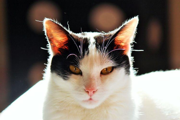 Cat Cat Animal