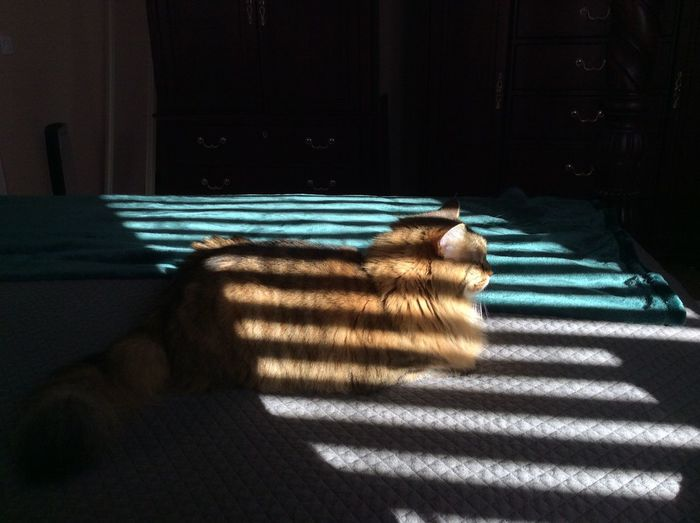 Always finding a sunbeam. One Animal Domestic Cat Pets Sunlight