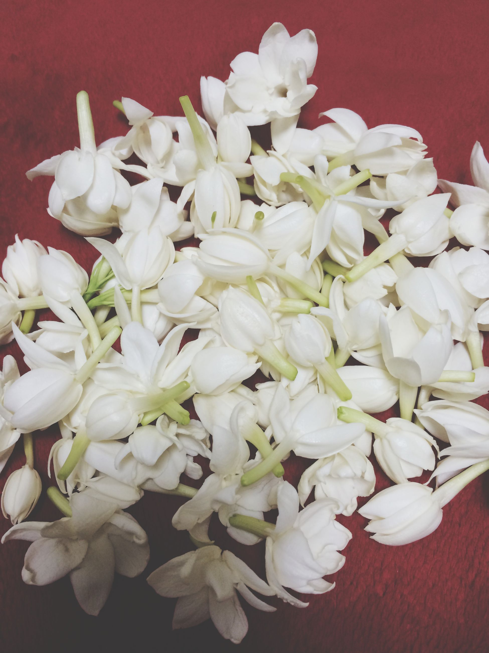 flower, white color, freshness, petal, fragility, indoors, flower head, beauty in nature, close-up, nature, white, high angle view, bunch of flowers, no people, growth, blooming, abundance, bouquet, still life, blossom
