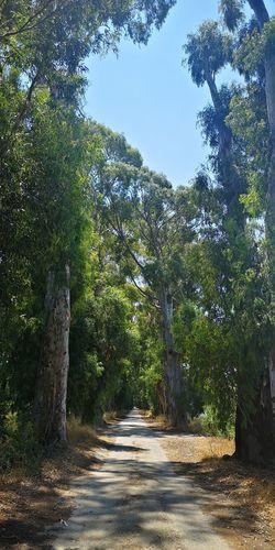 Isparta View