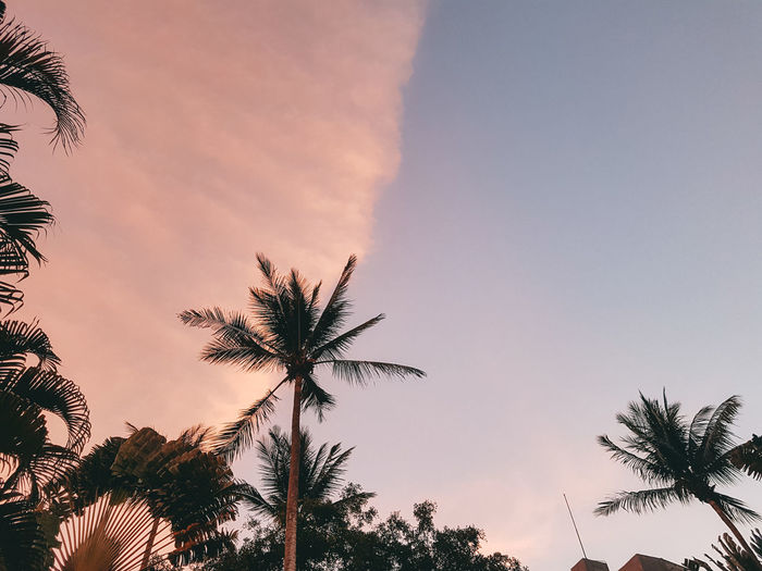 Palm tree at a beautiful sunset or sunrise with moody sky