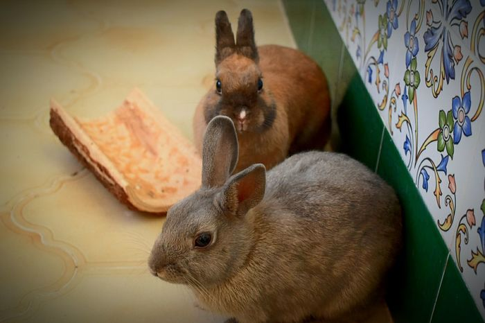 My little bunnys Bunny  Bunny 🐰 Bunny Love Bunnylove Bunny! Bunnyatplay Bunny Rabbit Bunnyrabbit Rabbit Rabbits Rabbit ❤️ Rabbits 🐇 Rabbit 🐇 Friends Friends ❤ Friendship Sister Sisters Sisterforever Pet Pets Pet Photography