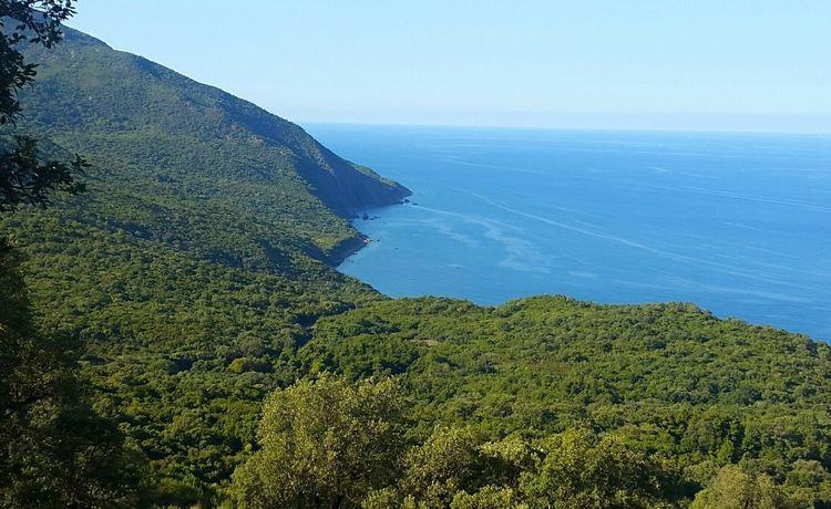 Good morning life Annaba Beaches Nature Love ♥ Growth Mountain Astronomy Sea