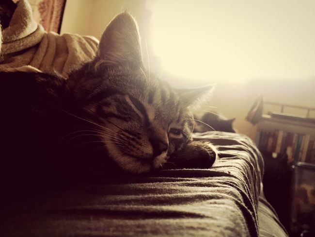 Rest Sunlight Tabby Cats Cat Pets Domestic Cat Domestic Animals One Animal Animal Themes Mammal Feline Whisker Close-up Relaxation