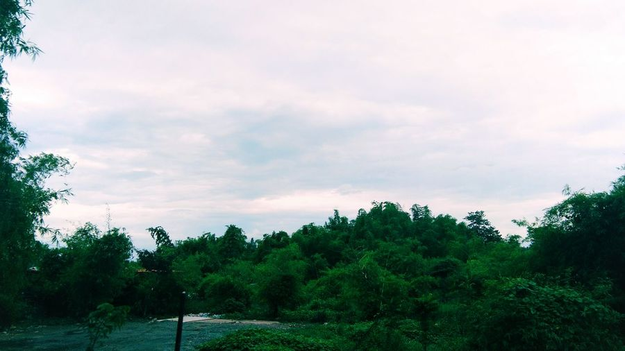Tree Cloud - Sky Nature No People Tranquility Outdoors Sky Day Beauty In Nature Road Trip Traveler Travelling Travel Philippines Cloud Land Vehicle Nature Road Tree