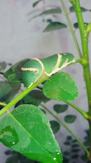 Mr.Caterpillar First Eyeem Photo
