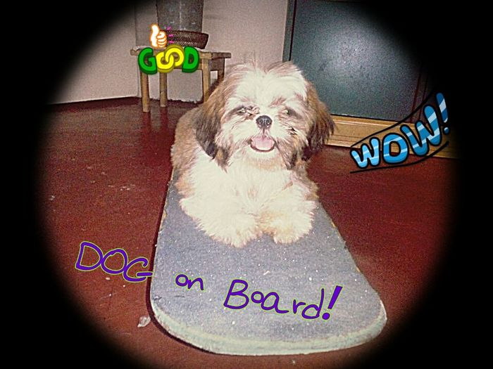 hello world!! am havin' my ride! Cute Pets Mypet Dog Skateboard Pet Go Skateboarding