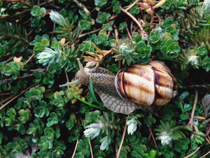 Directly above shot of snail on plant