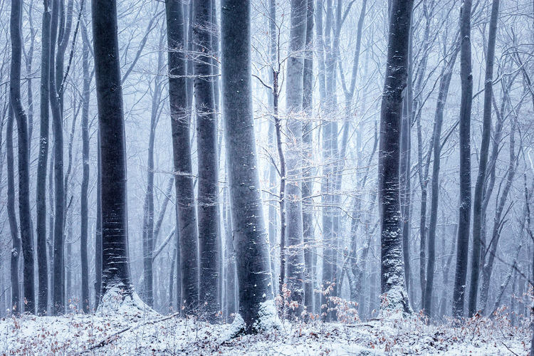 Tree Forest Winter Snow Land Cold Temperature Scenics - Nature Plant Tranquil Scene Non-urban Scene Trunk Nature Tree Trunk Beauty In Nature WoodLand Environment No People Landscape Tranquility Snowing Pine Tree Outdoors Pine Woodland Coniferous Tree Blizzard