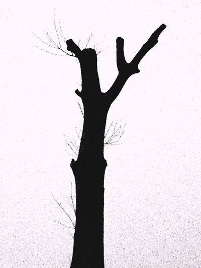 Black & White Trees Like Mymod
