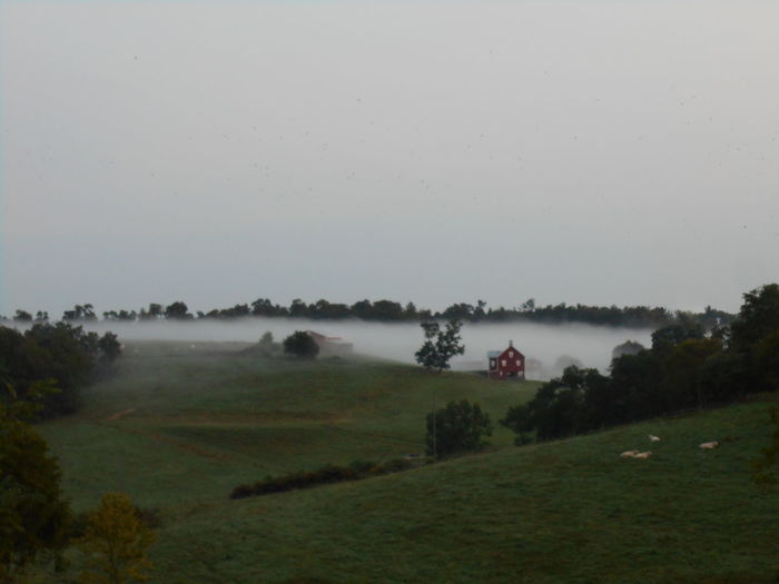Misty Morning in the Countryside Ohio, USA Peace And Quiet Rural America Smithfield Township Smithfield, OH Smithfield, OH 43948 Susan A. Case Sabir Unretouched Photography Beauty In Nature Cows In A Field Day Farmlandscape Field Grass Landscape Misty Morning Nature No People Outdoors Scenics Sky Tranquility Tree