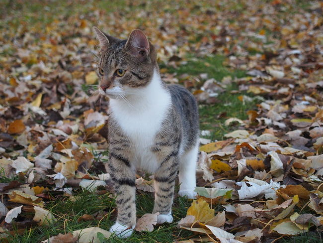Animal Themes Close-up Day Domestic Animals Domestic Cat Feline Field Focus On Foreground Leaf Looking Away Mammal Nature No People One Animal Outdoors Pets