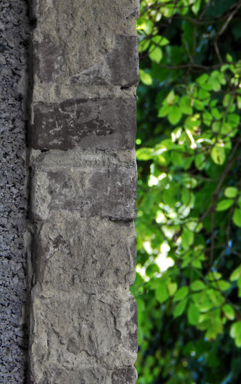 Bricket Bricket Wall Close-up Contrast Contrasting Colors Green Color Greenandgrey Growth Nature Natureandbuilding No People Outdoors Textured  Tree